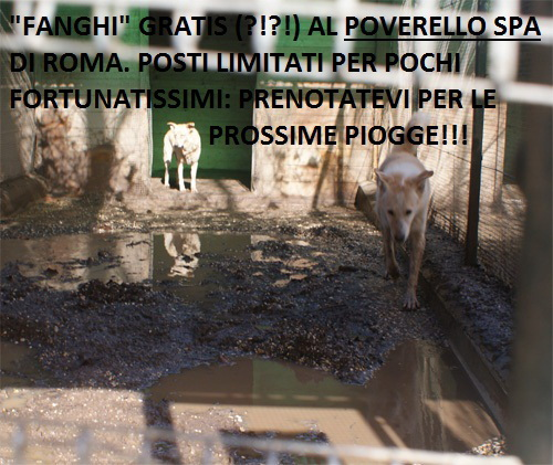 principessaulisse_recinto_allagato_19.2.10.jpg